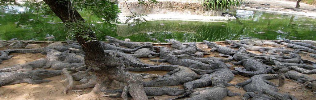 Crocodile Park - ECR