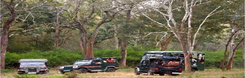 Mudumalai Safari