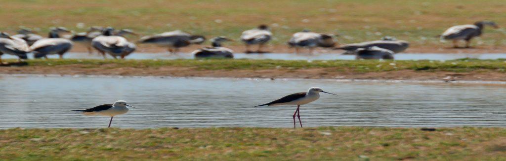 Suchindram Theroor Bird Sanctuary